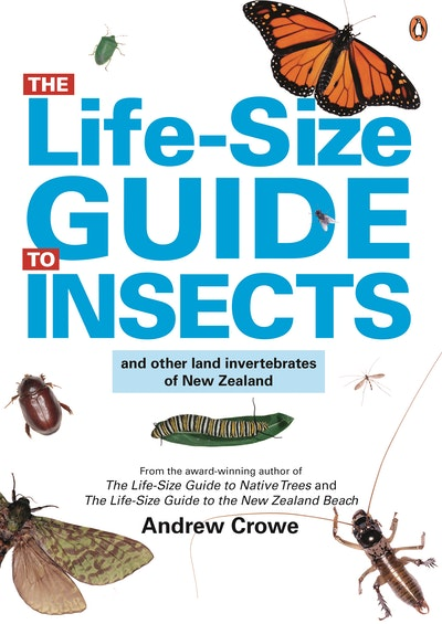 The Life-Size Guide to Insects