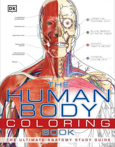 Human Body Coloring Book