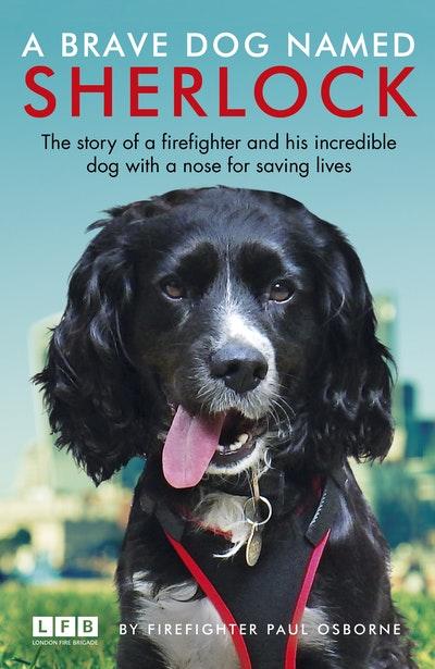 A Brave Dog Named Sherlock