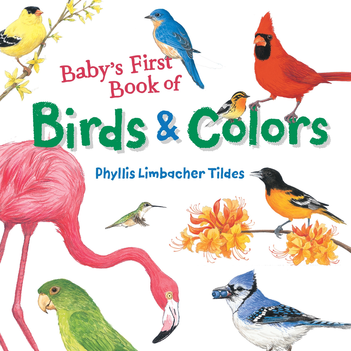 Picture of Baby's First Book Of Birds & Colors